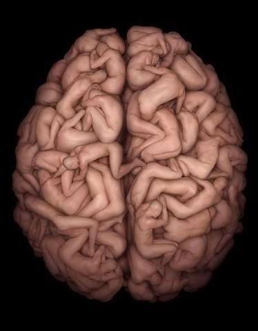 cerebro habitado